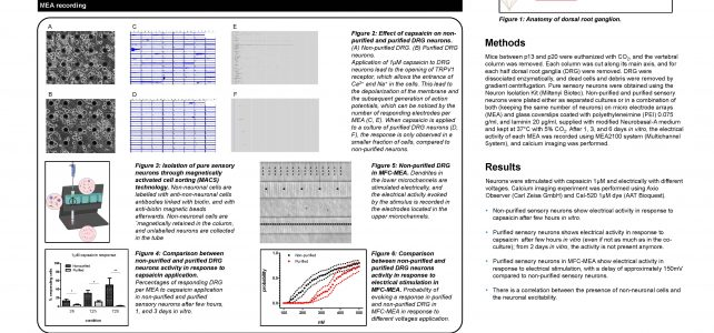 Set-up neuron-glia co-cultures for functional studies on multiple electrode arrays platforms