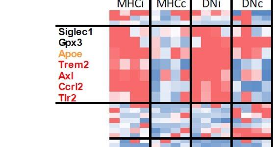 "Manuscript: ""A transcriptional toolbox for exploring peripheral neuro-immune interactions"""
